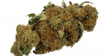 Marijuana-Cannabis-Weed-Bud-Gram