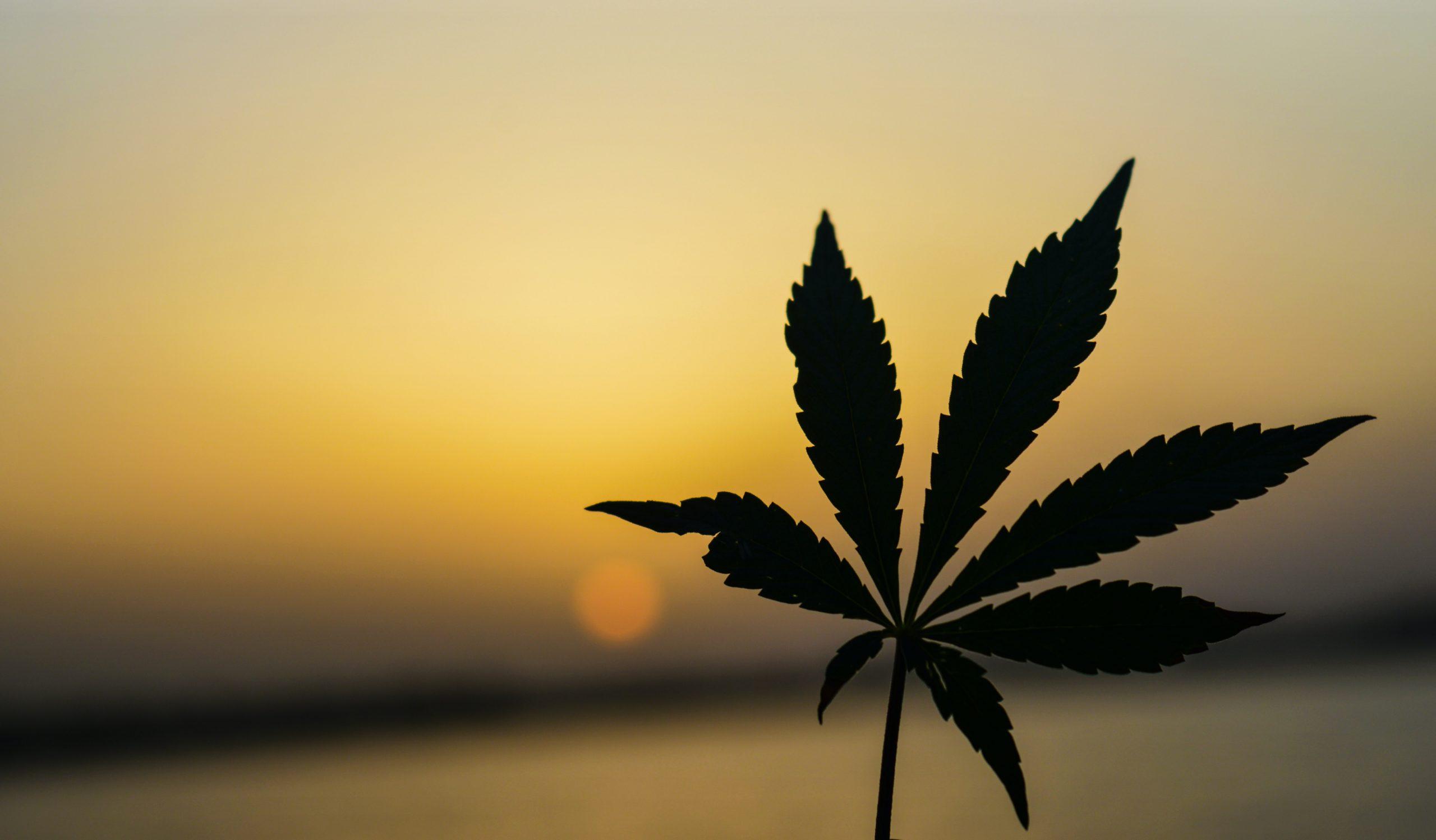 The Ongoing Link Between Marijuana and Psychosis